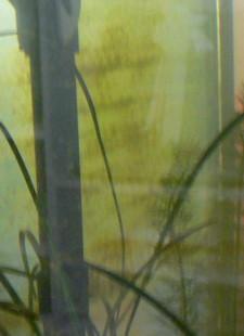 Algae Lines_of_algae 225