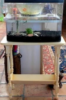 New_Eclipse_12_gold_fish_aquarium 225